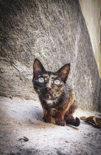Lovely cat 🐈