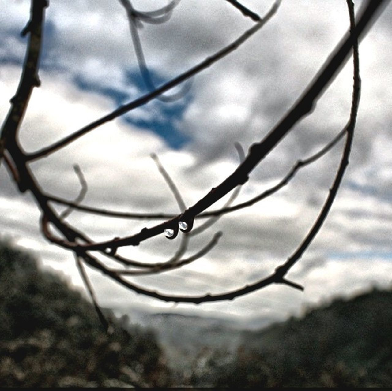 close-up, no people, day, focus on foreground, nature, outdoors, sky, tree