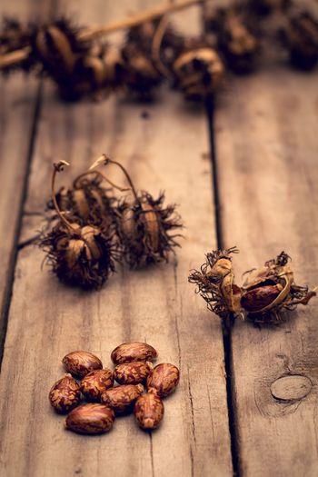 Hairoil Photography Photographer Castor Castorbean Castor-oil Plant Castor-oil Plant Castoroil Castor Plant Castor Seeds 50mm F1.8 Wood