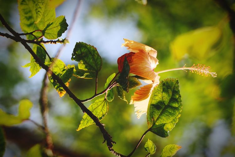 🍂🌼🍂 Fllowers Canon Tree Leaf Branch Close-up Animal Themes Sky Plant