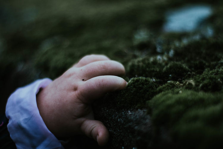 Close-up of person hand holding moss covered rock