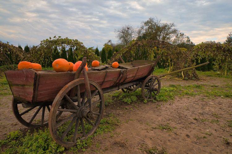 View of orange cart on field against sky