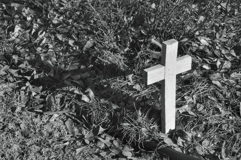 Cross Black And White Shadow Cross Shadow Garden Yard White Black Leaves Wood Wooden Cross Showcase March