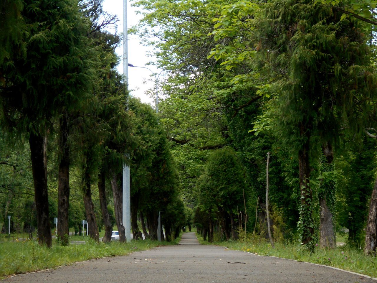 tree, road, nature, no people, forest, day, green color, growth, the way forward, outdoors, scenics, beauty in nature