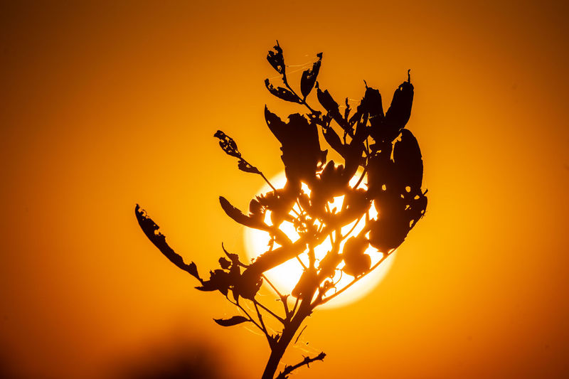 Botswana Africa Beauty In Nature Branch Orange Color Silhouette Sky Sunlight Sunset