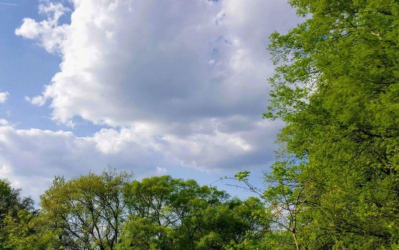 Tree Forest Blue Sky Cloud - Sky