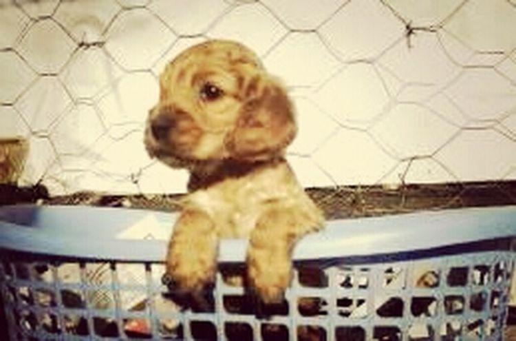 Dog My Son Bavlikizi