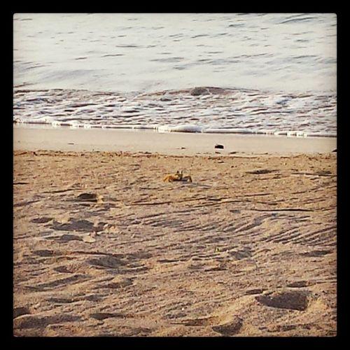 Crab Chilling Atthebeach Jamaica