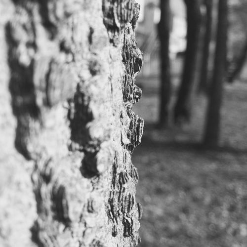 """Phonephotography by me """"Outside a Tree Bark"""" Hazelwood Tree Closeup IPhoneography"""