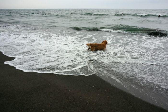 狗兒緊緊盯著隨浪花或遠或近的主人,像是害怕他消失一班,後來主人趴在版上滑像狗狗一起游了一陣。Hanging Out Pacific Ocean Yilan, Taiwan Dogs Clouds And Sky Enjoying Life Where Are You Going? Hello World