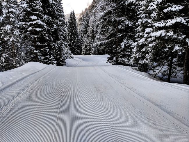 Freshly groomed track. Slope Prepared Groomed Fresh Track Tree Pattern Close-up Tranquility Tranquil Scene Scenics