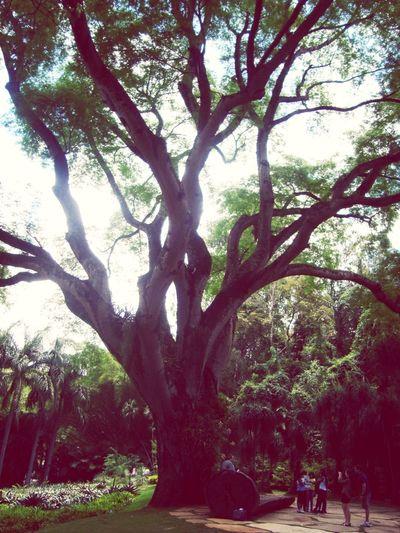 Eis a árvore!