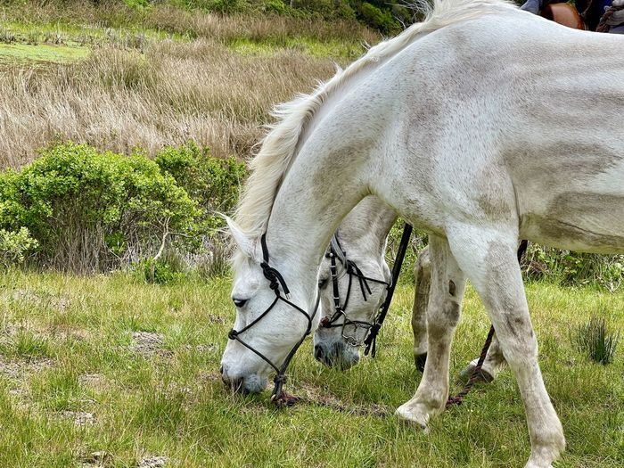 View of horse grazing in field