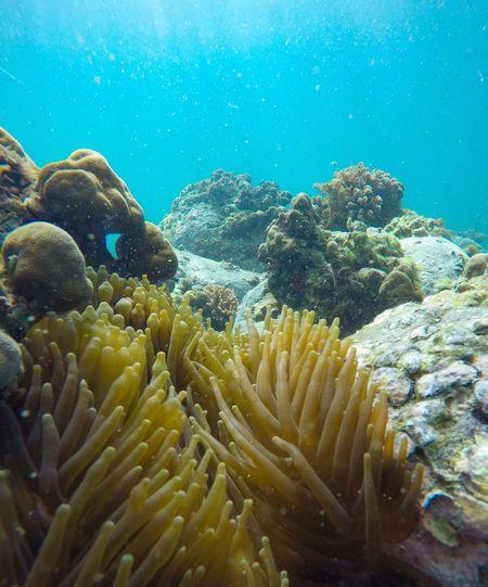 Underwater UnderSea Nature Sea Coral No People Sea Life Close-up