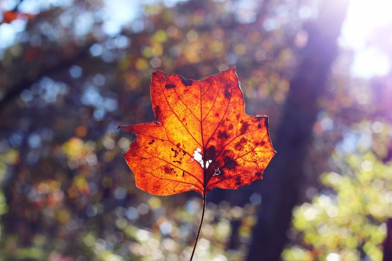 Leaf Nature EyeEm Nature Lover Eye4photography  Bokeh Nature_collection