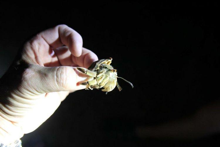 Crab Crobbo Hermitcrab Hermit Sommergefühle