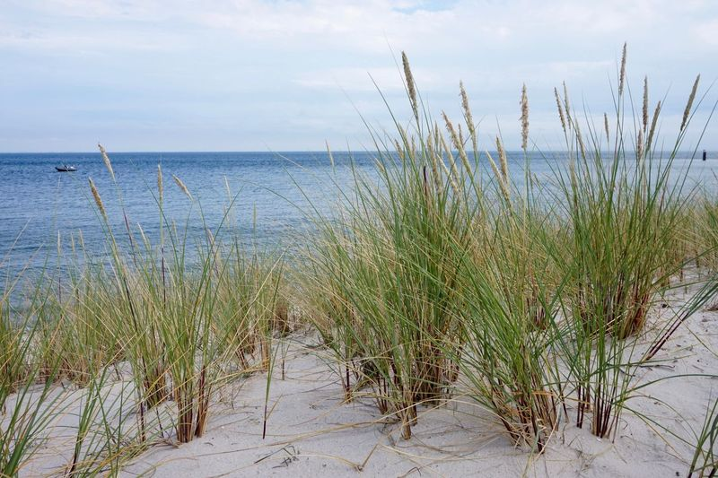 Beach Beauty In Nature Day Horizon Over Water Nature No People Reed Sand Sand Dune Scenics Sea Sylt Sylt Strand Sylt, Germany Tranquil Scene Water