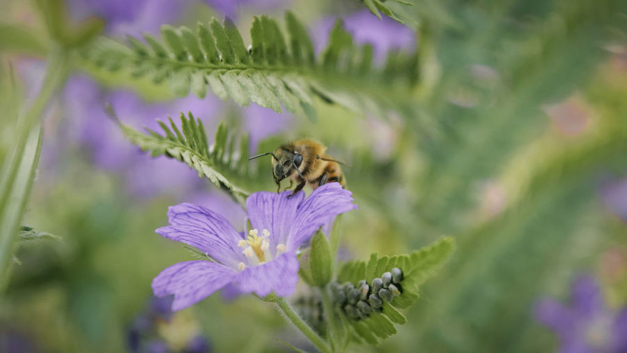Animal Themes Animal Wildlife Animals In The Wild Beauty In Nature Bee Blooming Bumblebee Buzzing Close-up Day Flower Flower Head Fragility Freshness Growth Insect Nature No People One Animal Outdoors Petal Plant Pollination Purple Thistle