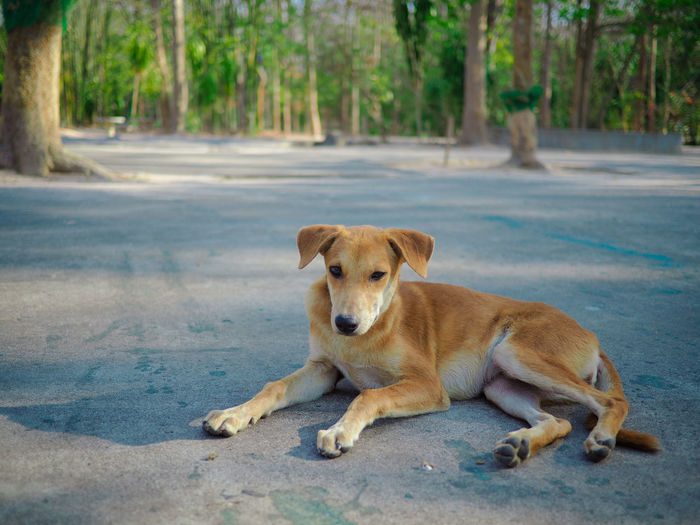 Portrait of dog relaxing on road in city