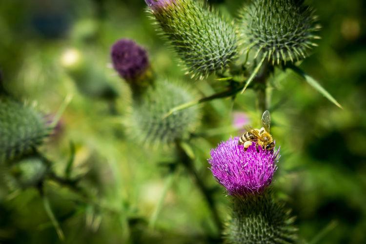 Bee autiful