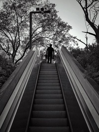 99 / 365 Blackandwhite Full Length Low Angle View Montjuic Moving Walkway  One Man Only One Person Railing Real People Rear View Silhouette Stairclimber Travel Destinations Tree Walking