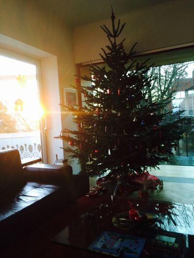Merry Christmas To all my followers🎄🎁🎅 Christmas Tree MerryChristmas