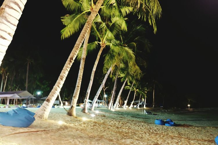 after party Beach Night Lifeinmoments Lifeisanadventure Neverstopexploring  Wanderlust Tropical Adventure Night Tree Palm Tree Beach Water Sand Tropical Climate Sky Coconut Palm Tree Tropical Tree Coconut Beach Umbrella Coastline Calm