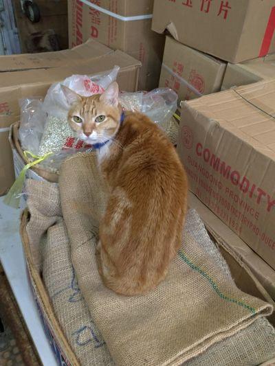 Cat boss One