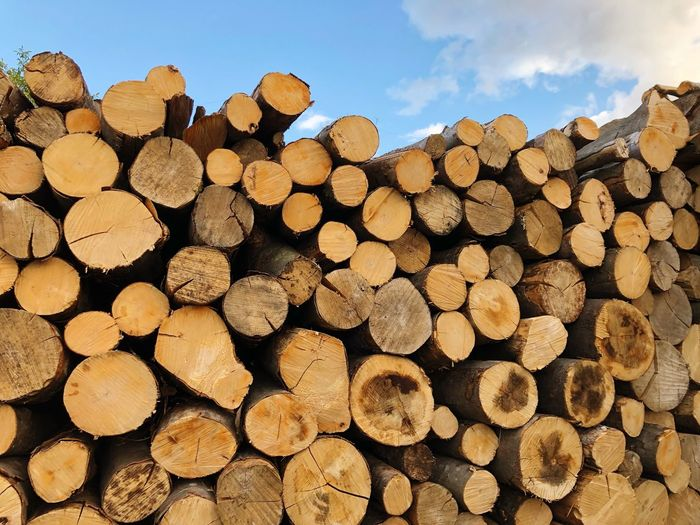 Heating Firewood Log Timber Lumber Industry Wood Deforestation Stack Abundance Large Group Of Objects Forest Sky Day Tree Environmental Issues Fuel And Power Generation Nature Wood - Material Woodpile No People Fossil Fuel