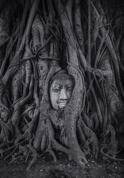 Root Thailand Watmahathat No People B&w Street Photography Buddha's Head in Tree Roots Human Representation Spirituality Statue No People Sculpture Outdoors Day Buddha Statue HEAD Vintage An Eye For Travel