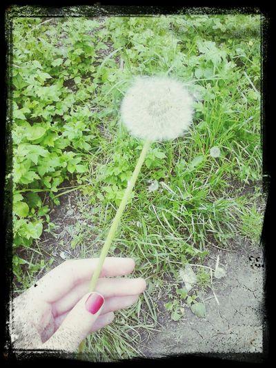 Прелесть)))