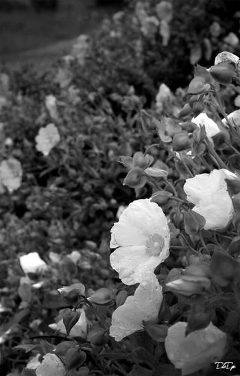 Flower Blackandwhite Photography Hi!