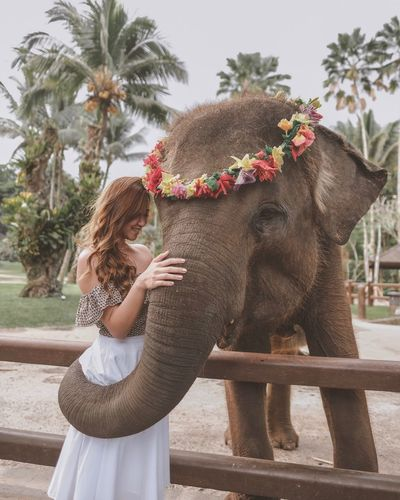 Smiling Young Woman Touching Elephant