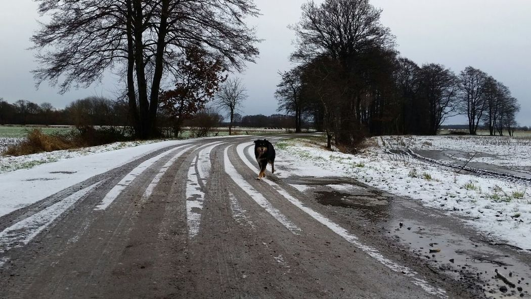 Tree Dog Rear View Animal Themes Nature Road One Animal Dog❤ Dogslife Australianshepherd Playing Dog The Way Forward Outdoors Day Pets Beauty In Nature Snow Adult Adults Only Mammal