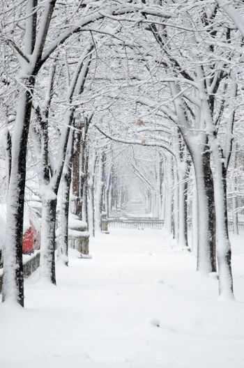 Bare Tree Cold Cold Temperature Covering Day Frozen Outdoors Season  Snow Tree Tree Trunk Tunnel White Winter Winter Tunnel