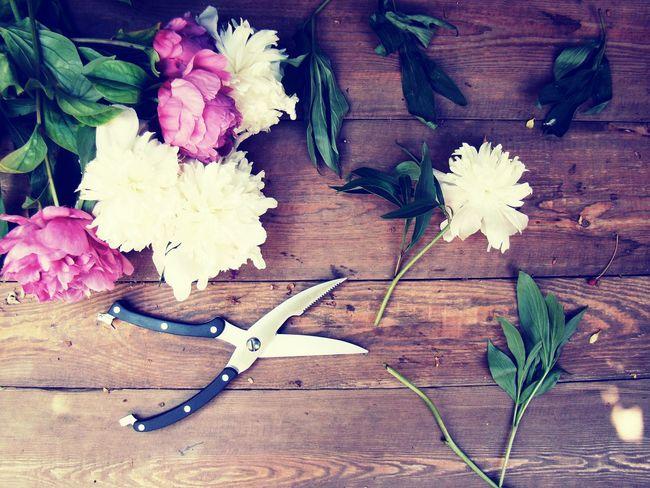 Пионы - дикой розы нежность. Прелестных бабочек альянс. Любви прекрасной неизбежность. Зари предутренний пасьянс. пион Peony  Nature Flowers