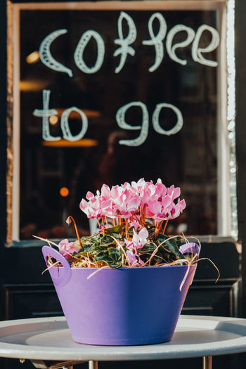 Storefront of a caffe in Amsterdam with a potted flower under the sign Coffee to go Flower Flowering Plant Plant No People Focus On Foreground Potted Plant Flower Pot Retail  Window Caffeine Caffee Coffee Time Coffee To Go Drinks Restaurants Restaurant Decor
