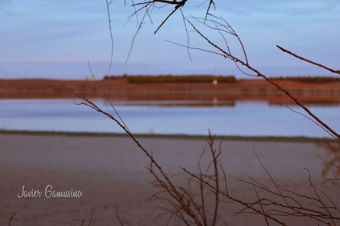 lagunas 2 Reflection Water Animal Wildlife Lake Nature Marsh Beauty In Nature Outdoors
