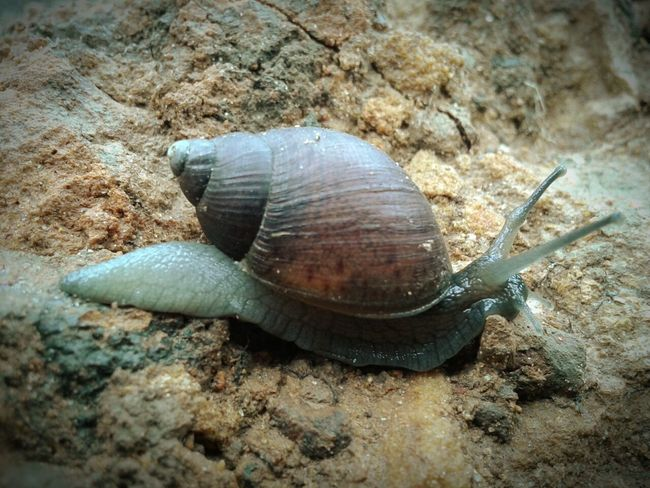 Caracol Conch Conchiglie Caracoles  Slow Slow Life Snail Snail Collection