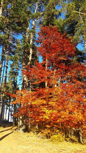 Colors Of Autumn Outdoors No People Beauty In Nature Rodopi Mountain Naturephotography