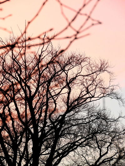 Bare Tree Beauty In Nature Clear Sky Idyllic Nature No People Outdoors Silhouette Sky Sunset Tranquil Scene Tree Twig