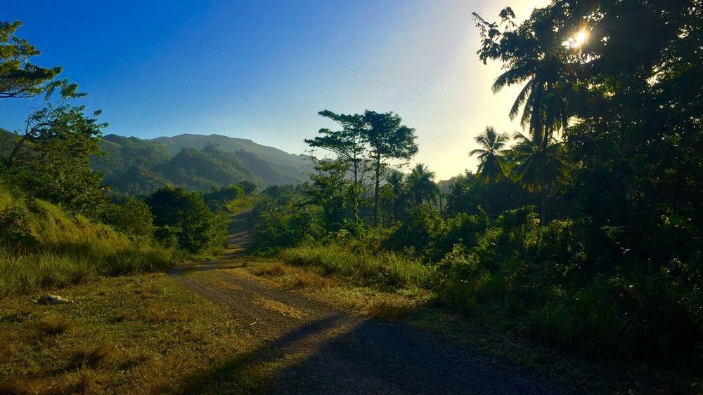 Beauty In Nature Clear Sky Day Dominican Republic Forest Growth Landscape Mountain Mountain Range Nature No People Outdoors Plant Road Scenics Sky Sunrise Tree
