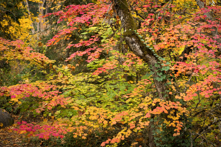 Flowering plants and trees in forest during autumn