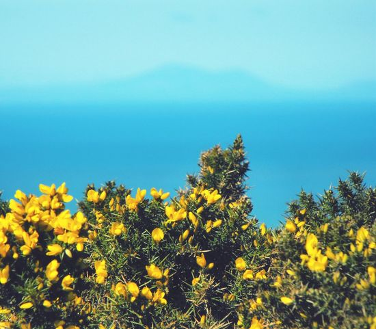 Yellow Flowers & distant Mountains over the Sea ... Wales Aberystwyth Spring Spring Flowers Yellow Yellow And Blue Море