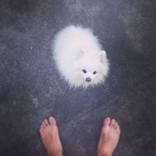 Bali Munduk Adityahomestay Miki cenestpasunpokemon dog