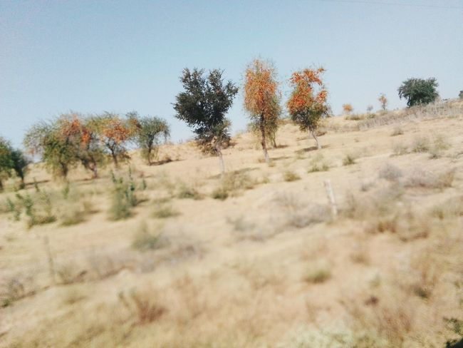 Landscape in Rajasthan India Landscape_photography Colourful Rajasthan Desert Landscape Trees Village View Desrt Scenes Village Photography Village Life Tree Nature Landscape Arid Climate Plant Day Outdoors No People Sand Dune Beauty In Nature Desert Clear Sky Grass Sky