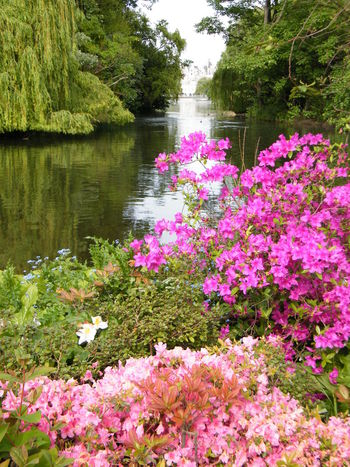 Beauty In Nature Blooming Close-up Day EyeEm LOST IN London Flower Flower Head Fragility Freshness Green Color Growth Lake Nature No People Outdoors Pink Color Plant Scenics Springtime Tranquil Scene Tranquility Tree Water
