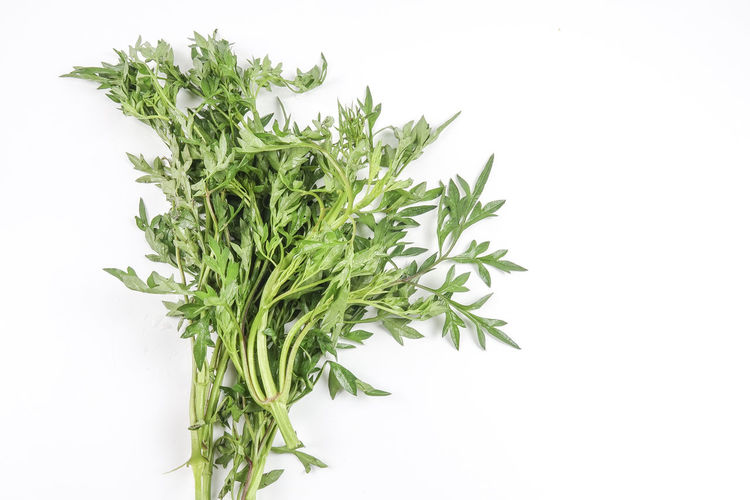 GREEN ULAM RAJA ON WHITE Close-up Cut Out Food Food And Drink Freshness Green Color Healthy Eating Herb Indoors  Leaf Nature No People Plant Plant Part Rosemary Still Life Studio Shot Vegetable Wellbeing White Background