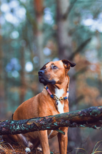 Hund Hundefotografie Hunde Liebe ♡ Doglover Dog Canine One Animal Mammal Domestic Domestic Animals Animal Themes Pets Animal Vertebrate Tree Focus On Foreground Pet Collar Collar Brown No People Day Plant Nature Looking Hunde Im Wald