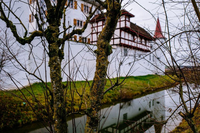 Fence Plant Schloss Wyhern Wyher